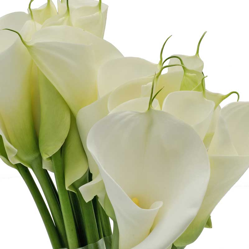 foto-bouquet-calla